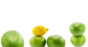 Citric fruits Stock Image