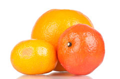 Citric fruits. Over a white reflective background Royalty Free Stock Photo