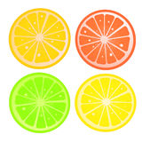 Citric slices Stock Image