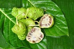 Citrifolia de Noni Fruit Morinda Imagem de Stock