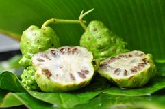 Citrifolia de Noni Fruit Morinda Imagem de Stock Royalty Free