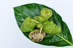 Citrifolia de Noni Fruit Morinda Imagens de Stock