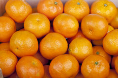 Citrinas frescas do mandarino em um mercado Imagens de Stock