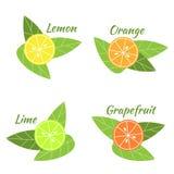 Citrinas laranja, cal, toranja e limão Foto de Stock Royalty Free