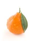 Citrino do Tangerine Fotos de Stock