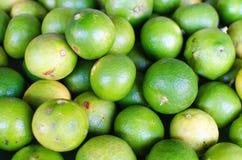 citrinos do cal Foto de Stock