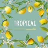 Citroen, Bloemen en Bladeren Exotische Grafische Tropische Banner vector illustratie