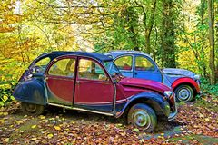 Citroen conservation, in Padley Gorge Woods, Grindleford. stock photos