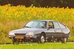 Citroen d'annata CX davanti ad un campo con i girasoli di fioritura Fotografie Stock Libere da Diritti