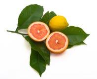 Citroen en grapefruit royalty-vrije stock afbeeldingen