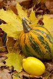 Citroen en het pompoen-geel nog-leven Stock Fotografie