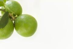 Citroen - fundo van Limão em verde Royalty-vrije Stock Foto's
