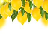Citroenboom op een wit Royalty-vrije Stock Foto