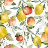 Citroenen en Sinaasappelen Royalty-vrije Stock Foto's