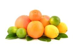 Citroenen, sinaasappelen en kalk Royalty-vrije Stock Foto's