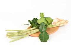 Citroengras, kaffir kalkbladeren en galangal, gebruikt als soep (De yam van Tom) Stock Afbeelding