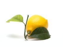 Citron Photographie stock