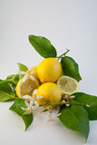 citron 2 Arkivfoto