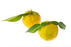 Citron. This is a photo of the citron used as seasoning Royalty Free Stock Images