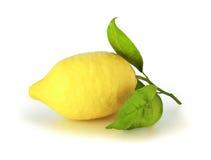 Citron images stock