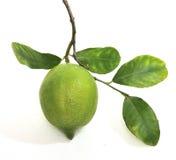 Citron avec le branchement Image stock