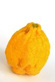 Citron Citrus medica Royalty Free Stock Photography