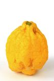 Citron (Citrus medica). Isolated against a white background Stock Photography
