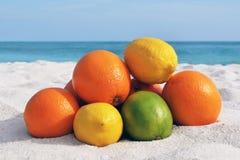 Citron en soleil Photographie stock