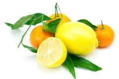 Citron et mandarine avec les lames vertes Images libres de droits