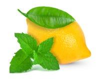 Citron et menthe Photos libres de droits