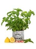 citron för basilikavitlökört arkivfoton