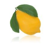 Citron frais de citron avec les lames vertes Image stock