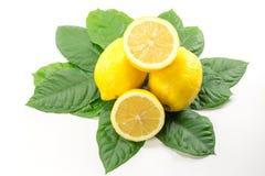 Citron jaune d'isolement Photo stock