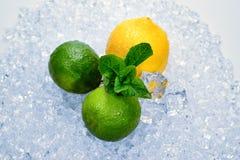 Citron, limefrukt och mintkaramell p? is royaltyfri bild