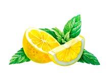 Citron med mintkaramellsidor som isoleras på den vita vattenfärgillustrationen Arkivbilder