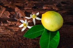 Citron med sidor och blommor arkivbilder