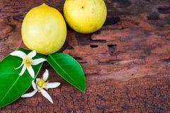 Citron med sidor och blommor royaltyfri fotografi