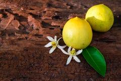Citron med sidor och blommor arkivbild
