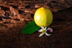 Citron med sidor och blommor royaltyfri bild