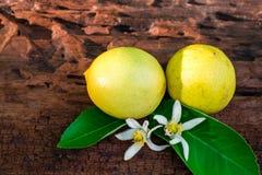 Citron med sidor och blommor royaltyfria bilder