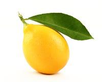 Citron med skivan royaltyfria bilder