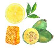 Citron, miel et feijoa Photographie stock libre de droits