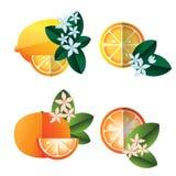 Citron- och apelsinillustration Fotografering för Bildbyråer