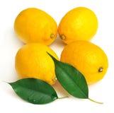 Citron och blad Royaltyfri Foto