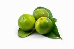 Citron- och kaffirlimefruktleaves Arkivbild