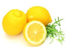 Citron och rosmarinar fotografering för bildbyråer