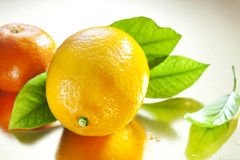 Citron och tangerin arkivbild