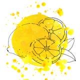 Citron- och vattenfärgfärgstänk Fotografering för Bildbyråer