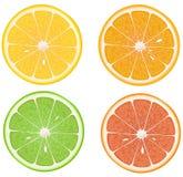 Citron, orange, limette, pamplemousse. Images libres de droits