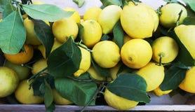 Citron organique et naturel frais avec des feuilles sur le bureau du marché, vue supérieure image libre de droits